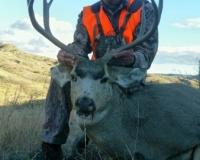 Deer2016 (3)
