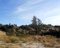 scenery-sandypinehills-1000